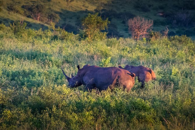 3-Day African Safari & Lesotho from Durban