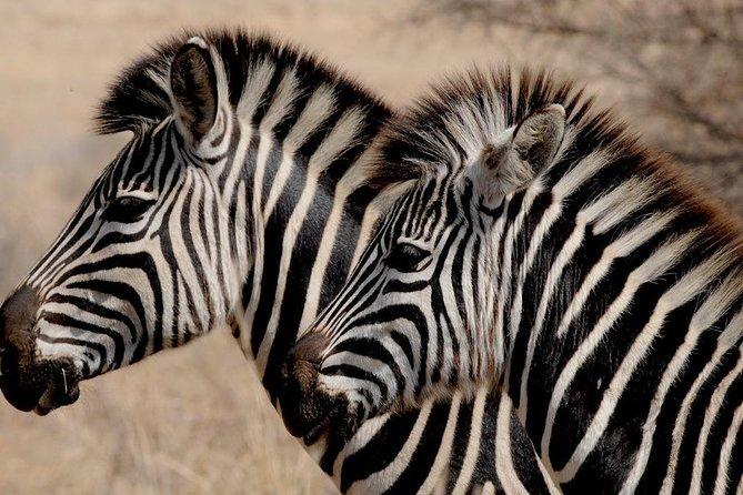 Luxury 5-Day Lesotho, Drakensberg & Safari Tour from Durban