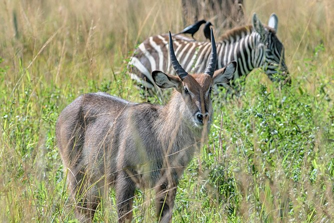 Uganda the Pearl of Africa Complete Wildlife 20 Day Safari photo 2