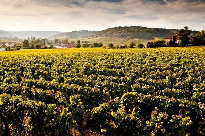 Private excursion to Côte de Beaune and Côte de Nuits (full day)