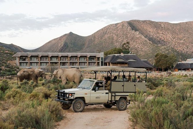 Private Full-Day Aquila Safari Tour from Cape Town with Lunch