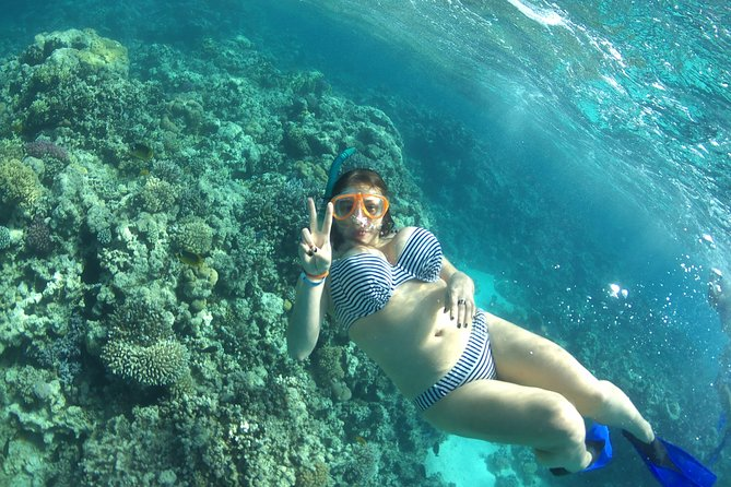 Royal Dolphin House & Water Sports - VIP Snorkeling Sea Trip - Hurghada photo 22
