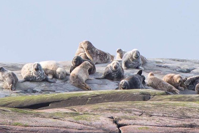 Small Group Wildlife Sea Safari