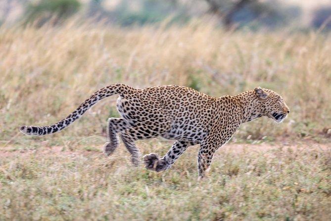 5-Days Safari Discover Ngorongoro Crater and Serengeti National Park