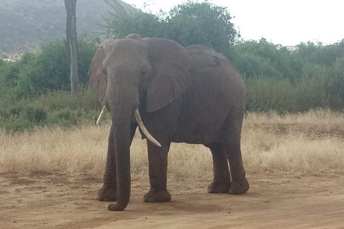 3 days pride of Africa maasai mara budget Camping safari