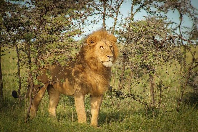 8-Days Adventures Safari in Tanzania.