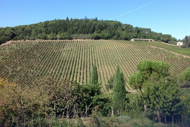 Shore Excursions Pisa and Chianti Wine!