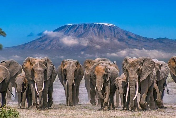 6 Days 5 Nights Nairobi - Amboseli - Tsavo West - Tsavo East - Nairobi