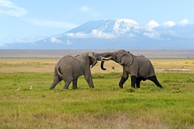 Weekend Getaway – Amboseli