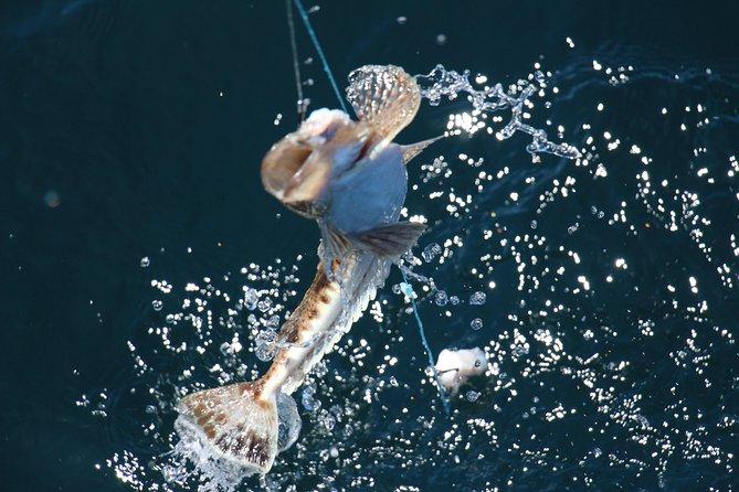 Half Day Bay - East Coast Tasmania Fishing Charter