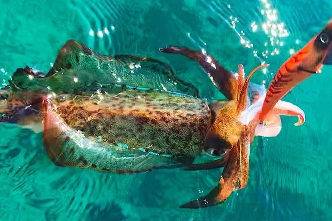 Full Day Bay Package - East Coast Tasmania Fishing Charter photo 6