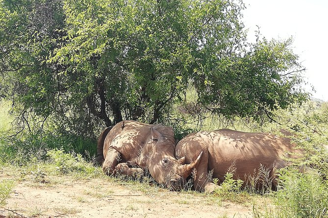 Pilanesberg & safari lion park photo 3