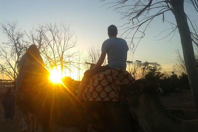 Agadir Camel sunset with dinner transfer included