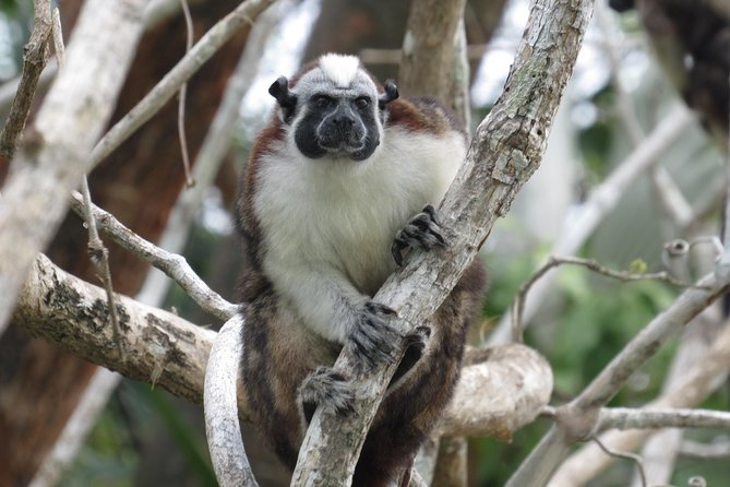 Combo: Monkey Island and Sloth Sanctuary