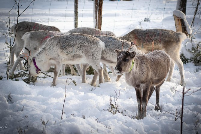 Connect with the Reindeer