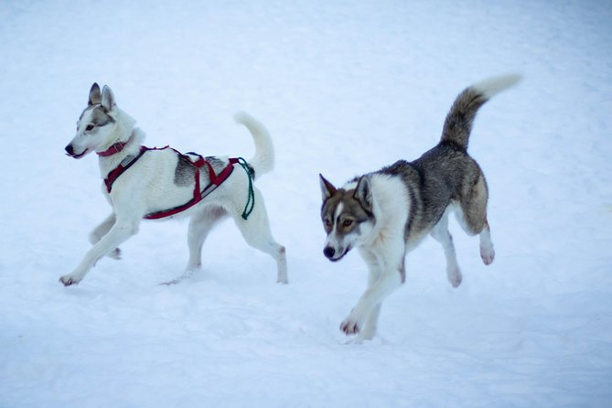 After the ride let the huskies kiss and play with you!