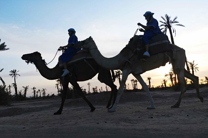 Dromedary ride in the palm oasis