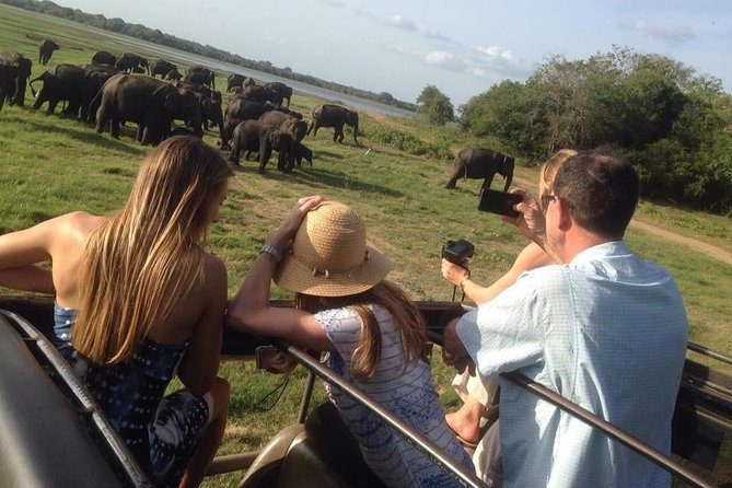 Minneriya Elephant Safari With Sigiriya Rock & Dambulla Cave Temples (Full Day)