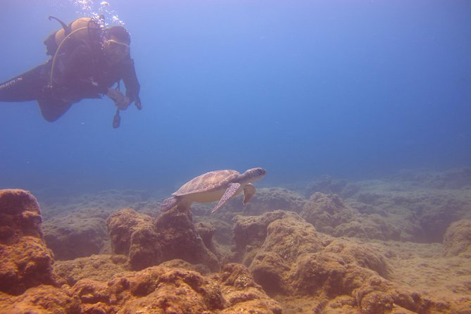 Alanya: Scuba diving experience for beginners photo 2