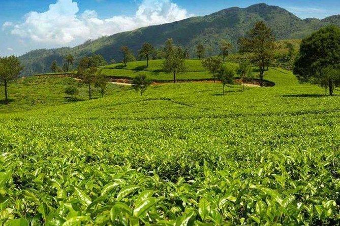 Kandy to Nuwara eliya Day Tour