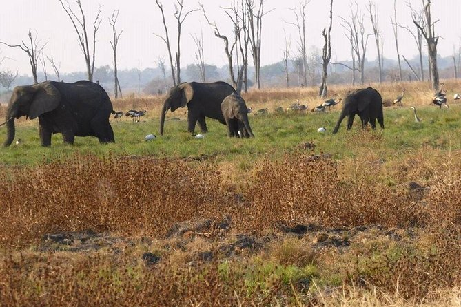 Rhino Walk Safari photo 6