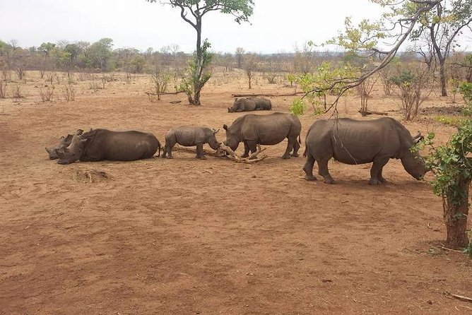 Rhino Walk Safari photo 1