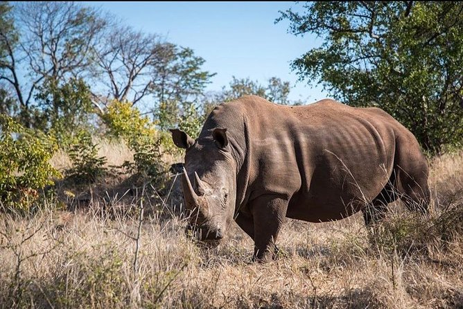 Rhino Walk Safari photo 11