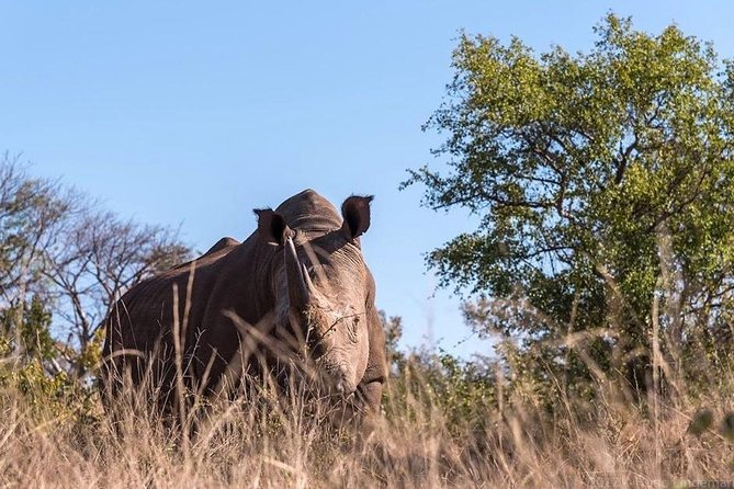 Rhino Walk Safari photo 7