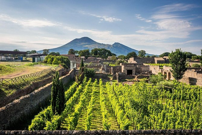 Vesuvius, Pompeii (private guide),vineyards and winery tour, lunch wine taste .