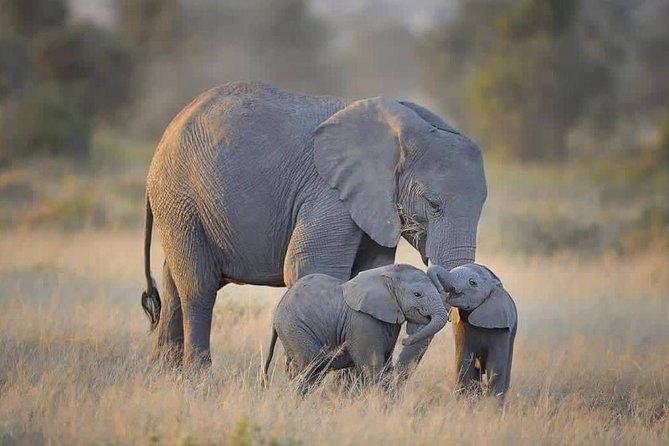4 days Tarangire, Serengeti & Ngorongoro