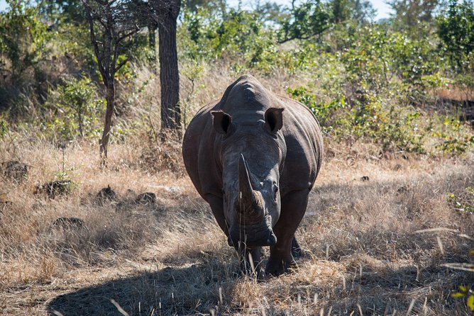 Rhino walking safari photo 1