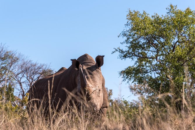 Rhino walking safari photo 2