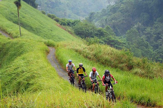 Wonderful MOUNTAIN DOWNHILL Cycling Tour Kintamani-Ubud