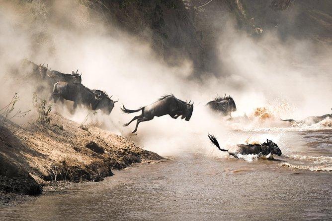 9 days Great Migration Safari