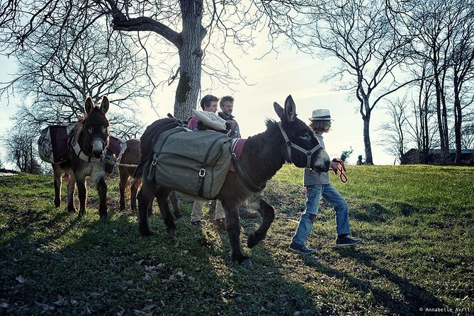Walks and hikes with donkeys