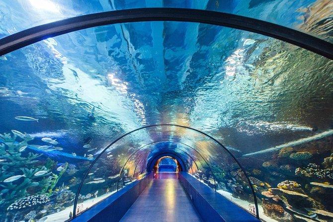 Acuario de Antalya con 3 tipos de opciones de entradas + traslados al hotel