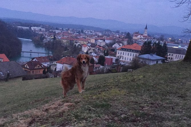 The view of city center Novo mesto from Marof and my dog Nala