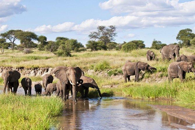 Ngorongoro Crater Adventure Tour from Arusha
