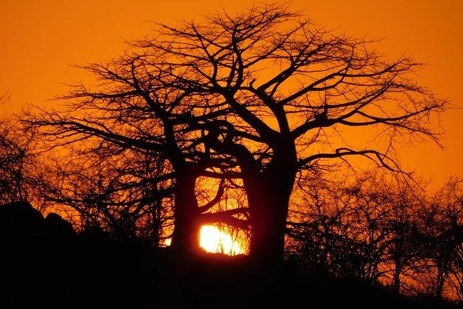 Full-Day Selous Game Reserve And Udzungwa Trekking Trip in Tanzania