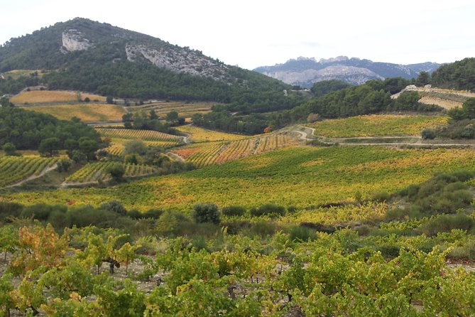 Provence Cru Wine Small-Group Half-Day Tour from Avignon