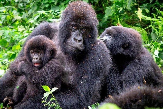 3-Day Gorilla Trekking Bunyonyi Mist Relaxation Safari