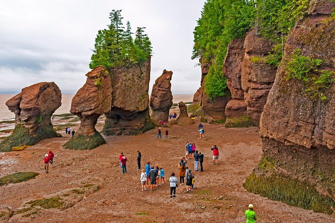Best of Fundy with Hopewell Rocks - Private Safe Tour