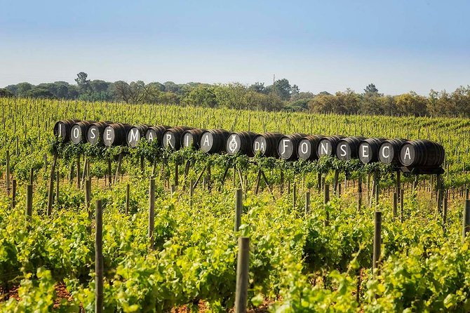 South Portugal Wine Route Private Full Day Tour from Lisbon photo 6