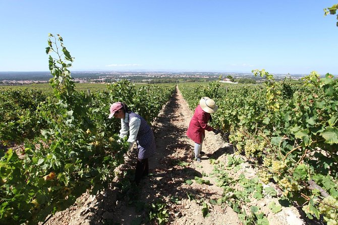 South Portugal Wine Route Private Full Day Tour from Lisbon photo 3