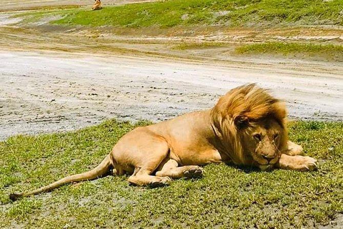 4 Days Safari Serengeti National Park & Ngorongoro Conservation Area
