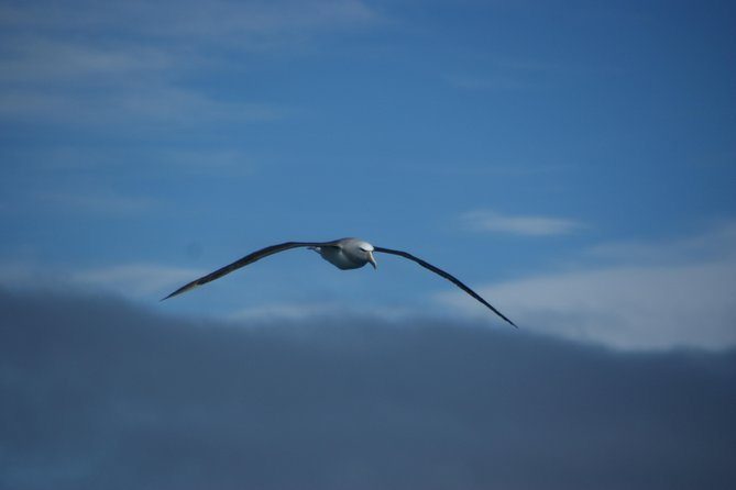 Albatross on 9 out of 10 trips!