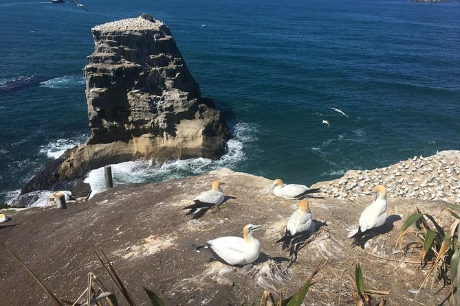 Eco Group tour to Muriwai Beach and Gannet Colony