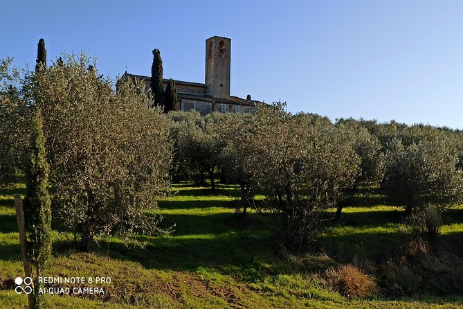 Regular Wine Tour in Chianti and visit of Lucca - small group sharing photo 22