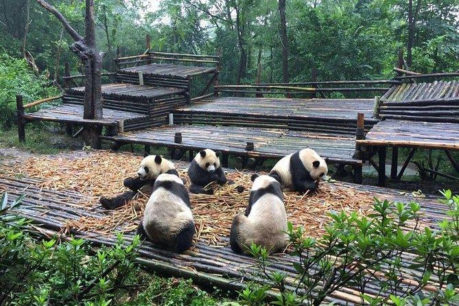 Base de Panda Chengdu, Sichuan