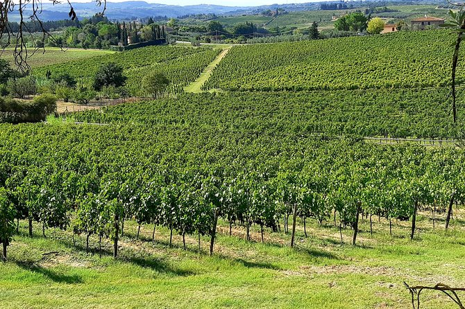 Regular Wine Tour in Chianti and visit of Lucca - small group sharing photo 28